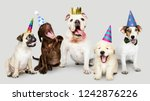 Stock photo group of puppies celebrating new year together 1242876226