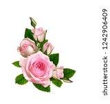 pink rose flower and green...   Shutterstock . vector #1242906409