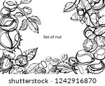 isolated vector set of nuts and ... | Shutterstock .eps vector #1242916870