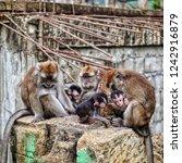 Small photo of Urban Jungle Connivance