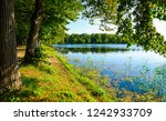forest river trees view. forest ... | Shutterstock . vector #1242933709
