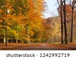empty lane in a public park on... | Shutterstock . vector #1242992719