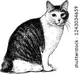sketch of a sitting domestic cat | Shutterstock .eps vector #1243034659