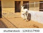 bikaner  india   november 24 ... | Shutterstock . vector #1243117900