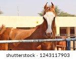 bikaner  india   november 24 ... | Shutterstock . vector #1243117903