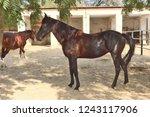 bikaner  india   november 24 ... | Shutterstock . vector #1243117906