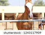 bikaner  india   november 24 ... | Shutterstock . vector #1243117909