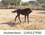 bikaner  india   november 24 ... | Shutterstock . vector #1243117930