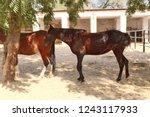 bikaner  india   november 24 ... | Shutterstock . vector #1243117933
