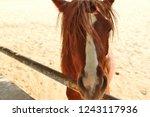 bikaner  india   november 24 ... | Shutterstock . vector #1243117936