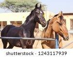 bikaner  india   november 24 ... | Shutterstock . vector #1243117939