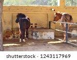 bikaner  india   november 24 ... | Shutterstock . vector #1243117969