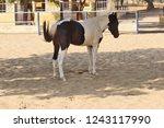 bikaner  india   november 24 ... | Shutterstock . vector #1243117990
