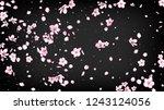 nice sakura blossom isolated...   Shutterstock .eps vector #1243124056