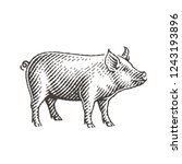 Pig. Hand Drawn Engraving Styl...
