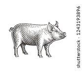 new year 2019 sign zodiac pig.... | Shutterstock .eps vector #1243193896