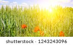 green field and sunrise on blue ... | Shutterstock . vector #1243243096