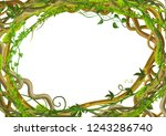 twisted wild lianas branches... | Shutterstock .eps vector #1243286740