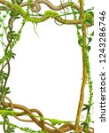 twisted wild lianas branches... | Shutterstock .eps vector #1243286746