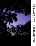 a dusk silhouette | Shutterstock . vector #1243394650
