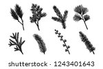 set of pine leaf silhouette on... | Shutterstock .eps vector #1243401643