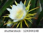 Blossom White Flower Of Dragon...