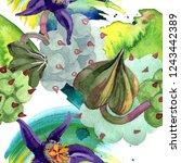 duvalia flower. watercolor... | Shutterstock . vector #1243442389