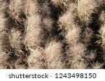dried tall grass plants in fall | Shutterstock . vector #1243498150