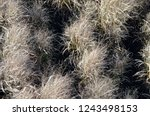 dried tall grass plants in fall | Shutterstock . vector #1243498153
