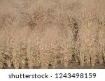 dried tall grass plants in fall | Shutterstock . vector #1243498159