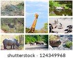 african wild animals collage ... | Shutterstock . vector #124349968