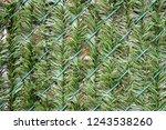 artificial grass woven through... | Shutterstock . vector #1243538260