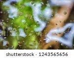 late autumn. frozen autumn... | Shutterstock . vector #1243565656