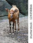 Bongo Deer In Natural Habitat...