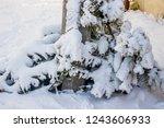 Close Up Christmas Tree Thrown...