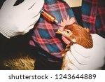 Chicken Farm Concept   Close U...