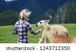 A young white caucasian blonde slim woman in a blue checkered shirt feeding alpaca in Peruvian Andes. Machu Picchu archeological park, Cusco, Peru. Animal care concept.