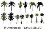 a natural coconut palm trees... | Shutterstock . vector #1243768180
