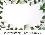 leaf frame on white background.   Shutterstock . vector #1243800379