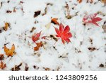 Falling Red Leaf On The Snow...
