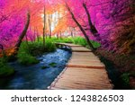 beautiful wooden path trail for ... | Shutterstock . vector #1243826503