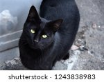 Stock photo a black cat with yellow eyes is looking at the camera macro 1243838983