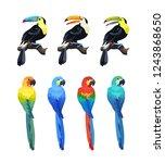 exotic tropical birds vector...   Shutterstock .eps vector #1243868650