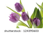 A Bouquet Of Purple Tulips And...