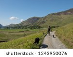 female walking with her dogs on ... | Shutterstock . vector #1243950076