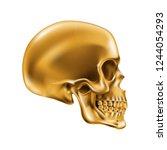 golden human skull on white...   Shutterstock .eps vector #1244054293