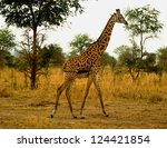 rothschild giraffe in the... | Shutterstock . vector #124421854