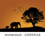 Stock photo baby elephant in the sunset 124424116