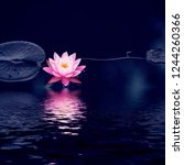lotus flower and lotus flower...   Shutterstock . vector #1244260366