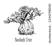 hand drawn sketch style baobab... | Shutterstock .eps vector #1244298040